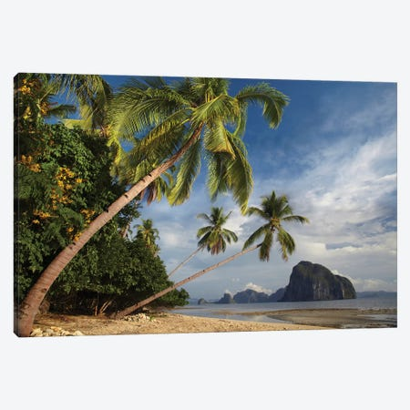 Palm Trees, Pinagbuyutan Island, Palawan, Philippines 3-Piece Canvas #TFI761} by Tim Fitzharris Canvas Print