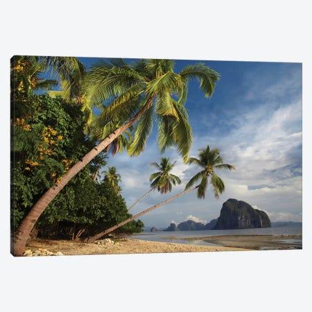 Palm Trees, Pinagbuyutan Island, Palawan, Philippines Canvas Print #TFI761} by Tim Fitzharris Canvas Print