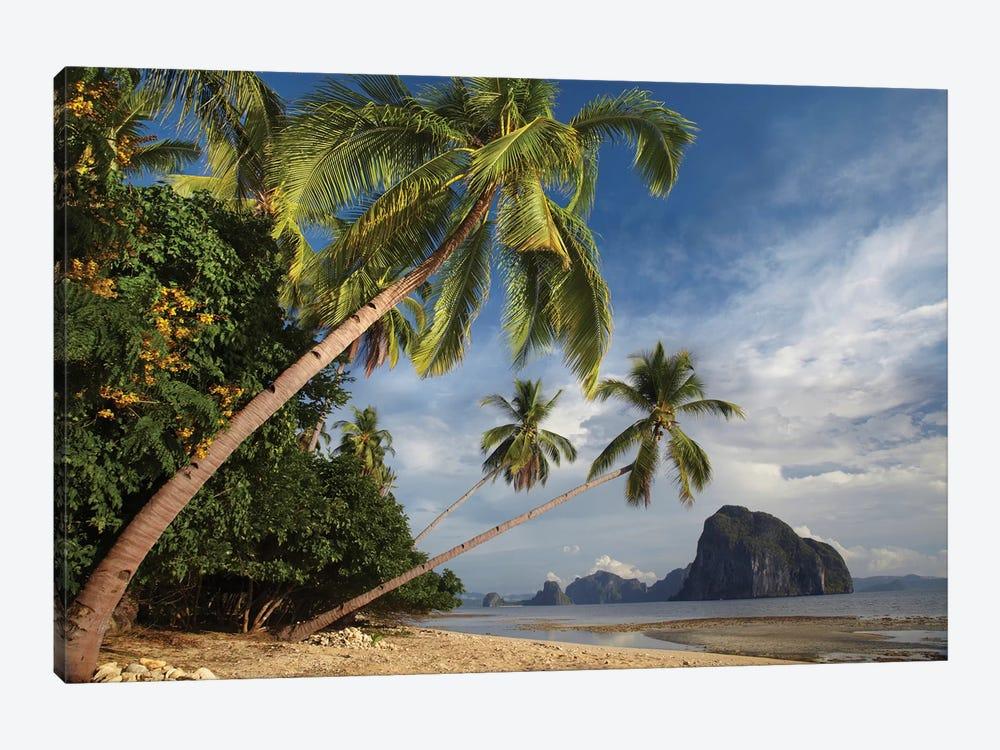 Palm Trees, Pinagbuyutan Island, Palawan, Philippines by Tim Fitzharris 1-piece Canvas Artwork