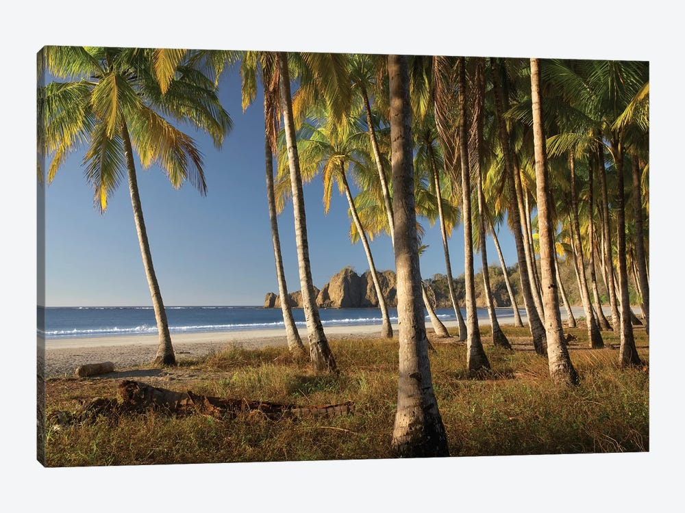 Palms At Playa Carrillo, Guanacaste, Costa Rica 1-piece Canvas Print
