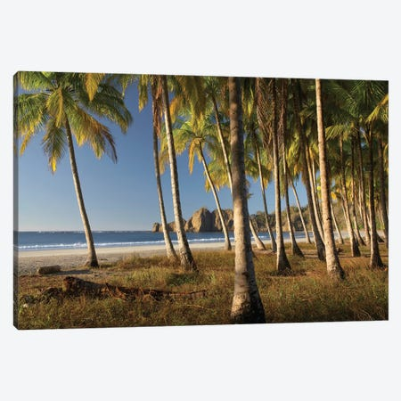 Palms At Playa Carrillo, Guanacaste, Costa Rica 3-Piece Canvas #TFI762} by Tim Fitzharris Canvas Art Print
