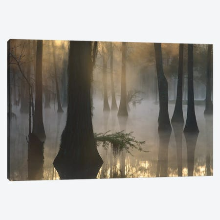 Bald Cypress Grove In Freshwater Swamp At Dawn, Lake Fausse Pointe, Louisiana II Canvas Print #TFI76} by Tim Fitzharris Canvas Wall Art