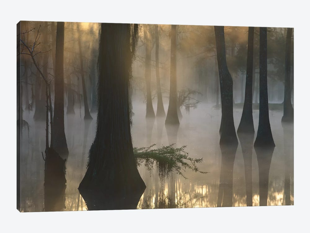 Bald Cypress Grove In Freshwater Swamp At Dawn, Lake Fausse Pointe, Louisiana II by Tim Fitzharris 1-piece Canvas Print