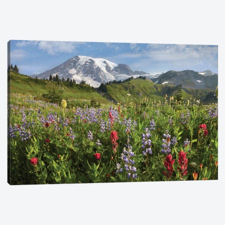 Paradise Meadow And Mount Rainier, Mount Rainier National Park, Washington - Horizontal Canvas Print #TFI778} by Tim Fitzharris Canvas Artwork