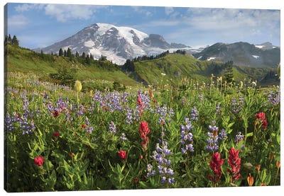 Paradise Meadow And Mount Rainier, Mount Rainier National Park, Washington - Horizontal Canvas Art Print
