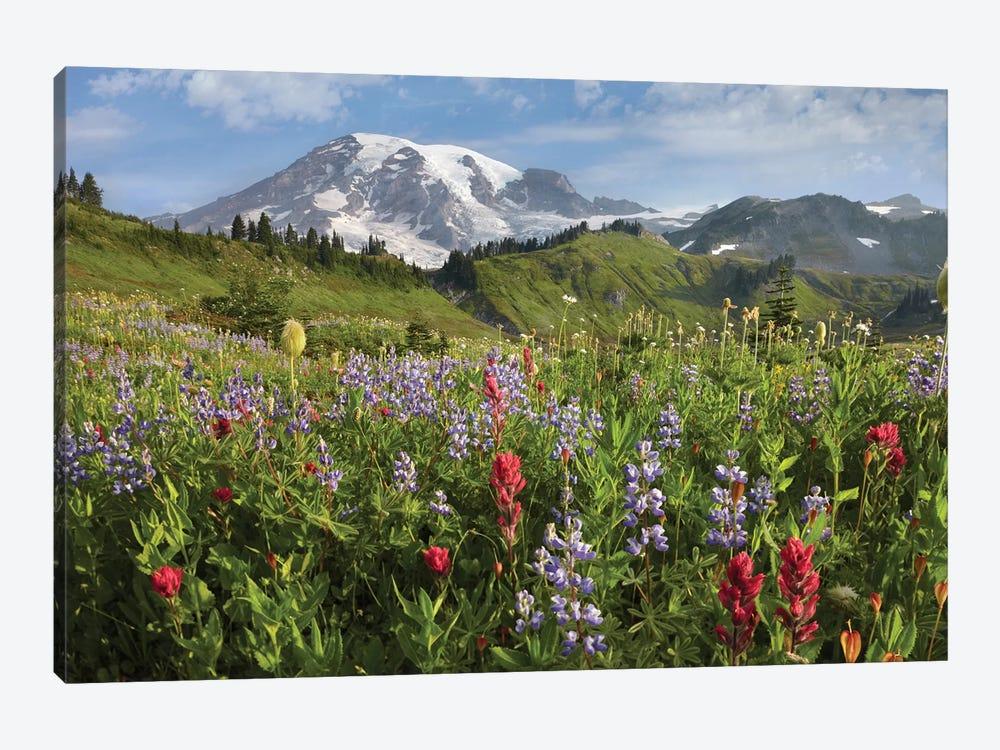 Paradise Meadow And Mount Rainier, Mount Rainier National Park, Washington - Horizontal by Tim Fitzharris 1-piece Canvas Art