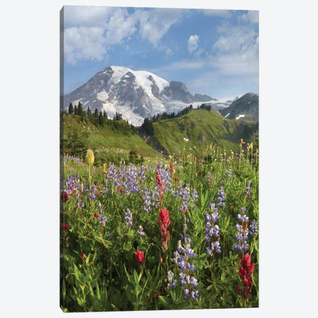 Paradise Meadow And Mount Rainier, Mount Rainier National Park, Washington - Vertical Canvas Print #TFI779} by Tim Fitzharris Canvas Art