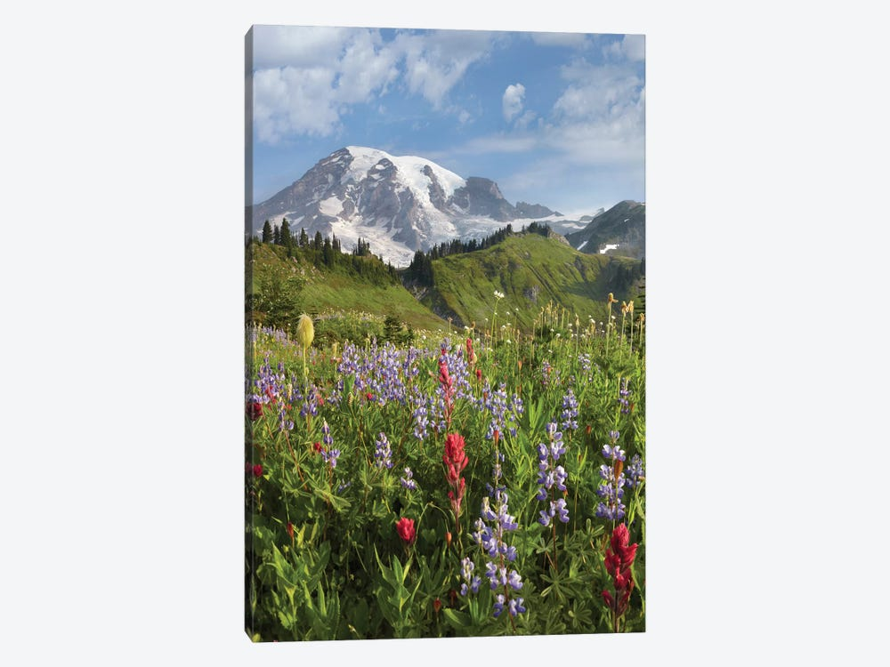 Paradise Meadow And Mount Rainier, Mount Rainier National Park, Washington - Vertical by Tim Fitzharris 1-piece Art Print