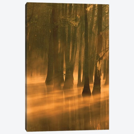 Bald Cypress Swamp, Calcasieu River Backwater, Lake Charles, Louisiana Canvas Print #TFI77} by Tim Fitzharris Canvas Wall Art