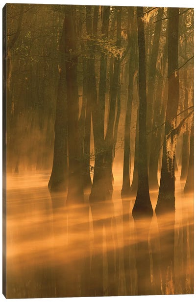 Bald Cypress Swamp, Calcasieu River Backwater, Lake Charles, Louisiana Canvas Art Print