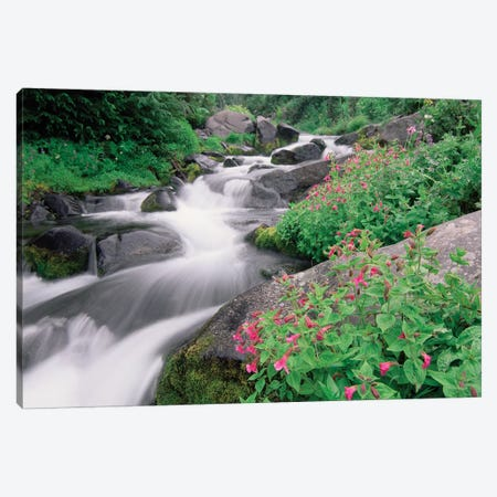 Paradise River Surrounded By Spring Flowers, Mt Rainier National Park, Washington Canvas Print #TFI781} by Tim Fitzharris Canvas Art Print