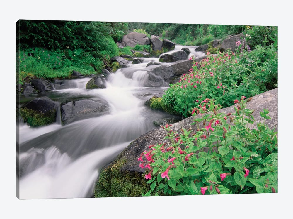 Paradise River Surrounded By Spring Flowers, Mt Rainier National Park, Washington by Tim Fitzharris 1-piece Canvas Artwork