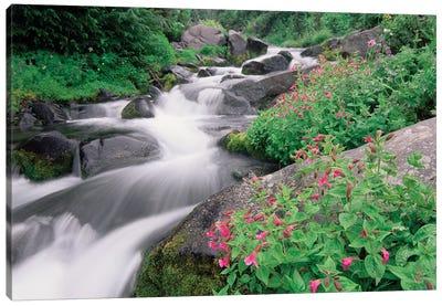 Paradise River Surrounded By Spring Flowers, Mt Rainier National Park, Washington Canvas Art Print