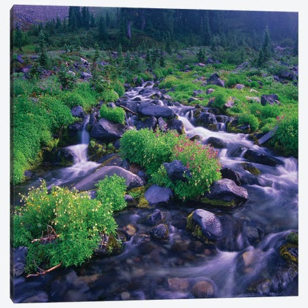 Paradise River With Wildflowers, Mount Rainier National Park, Washington Canvas Print #TFI782} by Tim Fitzharris Canvas Print