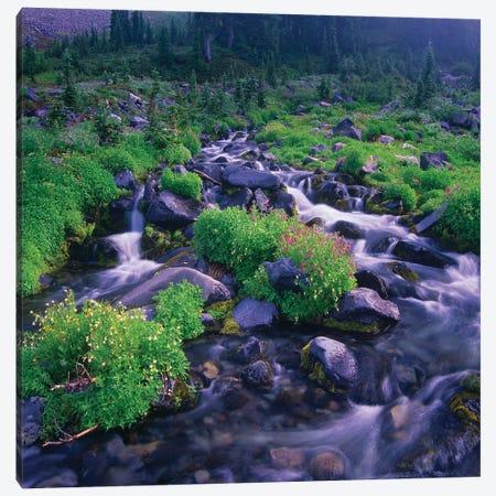 Paradise River With Wildflowers, Mount Rainier National Park, Washington Canvas Print #TFI782} by Tim Fitzharris Canvas Print