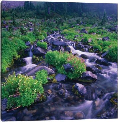 Paradise River With Wildflowers, Mount Rainier National Park, Washington Canvas Art Print