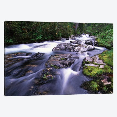 Paradise River, Mt Rainier National Park, Washington Canvas Print #TFI783} by Tim Fitzharris Art Print