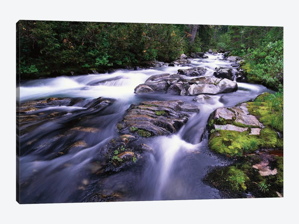 Paradise River, Mt Rainier National Park, Washington by Tim Fitzharris 1-piece Canvas Wall Art
