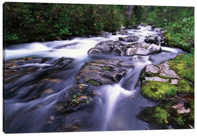 Paradise River, Mt Rainier National Park, Washington Canvas Art Print