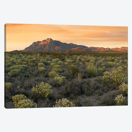 Pepperweed Meadow Beneath El Capitan, Guadalupe Mountains National Park, Texas Canvas Print #TFI786} by Tim Fitzharris Canvas Art