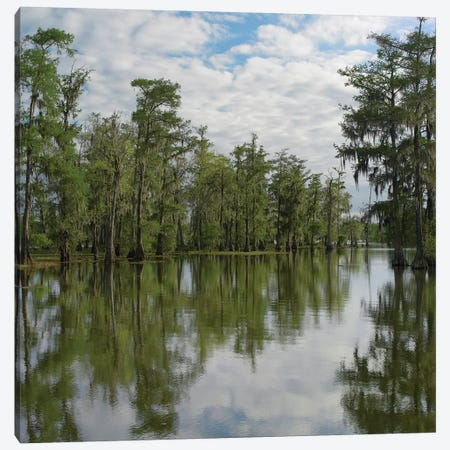 Bald Cypress Swamp, Cypress Island, Lake Martin, Louisiana Canvas Print #TFI78} by Tim Fitzharris Canvas Print