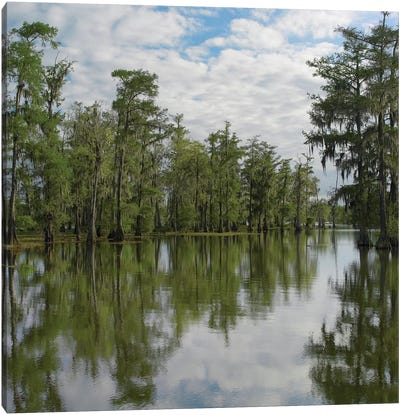 Bald Cypress Swamp, Cypress Island, Lake Martin, Louisiana Canvas Art Print
