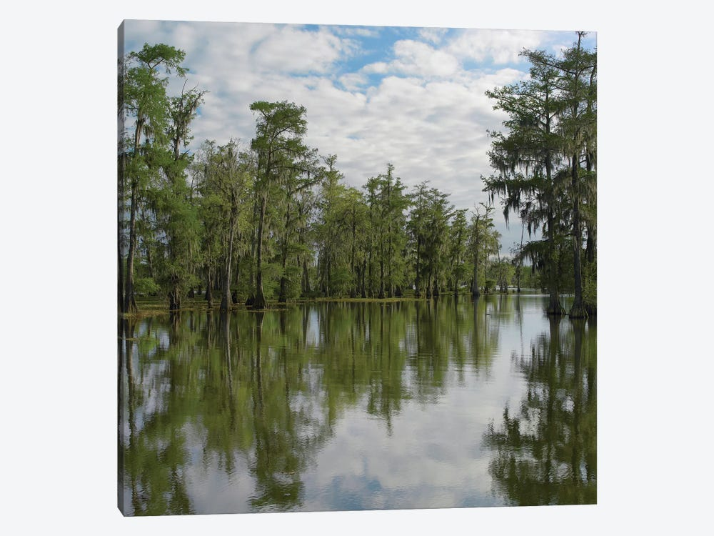 Bald Cypress Swamp, Cypress Island, Lake Martin, Louisiana by Tim Fitzharris 1-piece Canvas Art Print