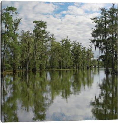 Bald Cypress Swamp, Cypress Island, Lake Martin, Louisiana Canvas Art Print