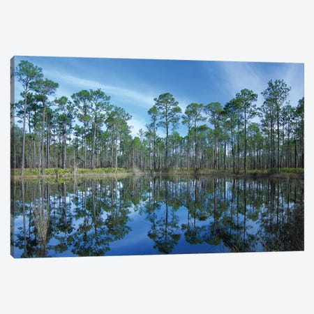 Pine Forest Mirrored In Reflection Pond, Ochlocknee River State Park, Florida Canvas Print #TFI791} by Tim Fitzharris Canvas Artwork
