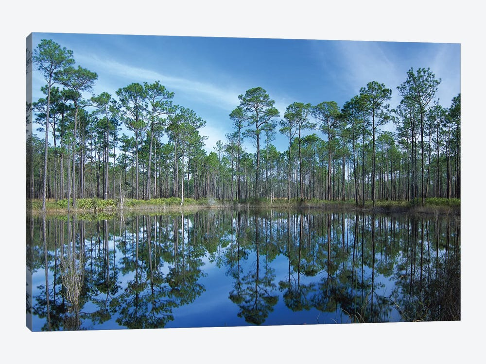 Pine Forest Mirrored In Reflection Pond, Ochlocknee River State Park, Florida by Tim Fitzharris 1-piece Canvas Art Print
