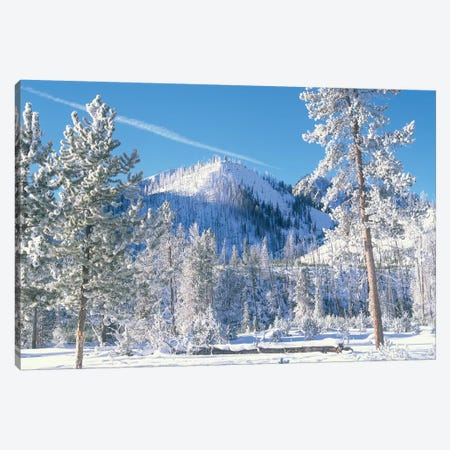 Pine Trees Covered With Snow In Winter, Yellowstone National Park, Wyoming Canvas Print #TFI793} by Tim Fitzharris Canvas Art
