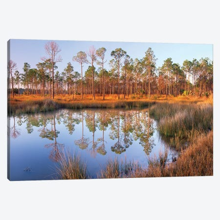 Pine Trees Reflected In Pond Near Piney Point, Hagen's Cove, Florida Canvas Print #TFI795} by Tim Fitzharris Art Print