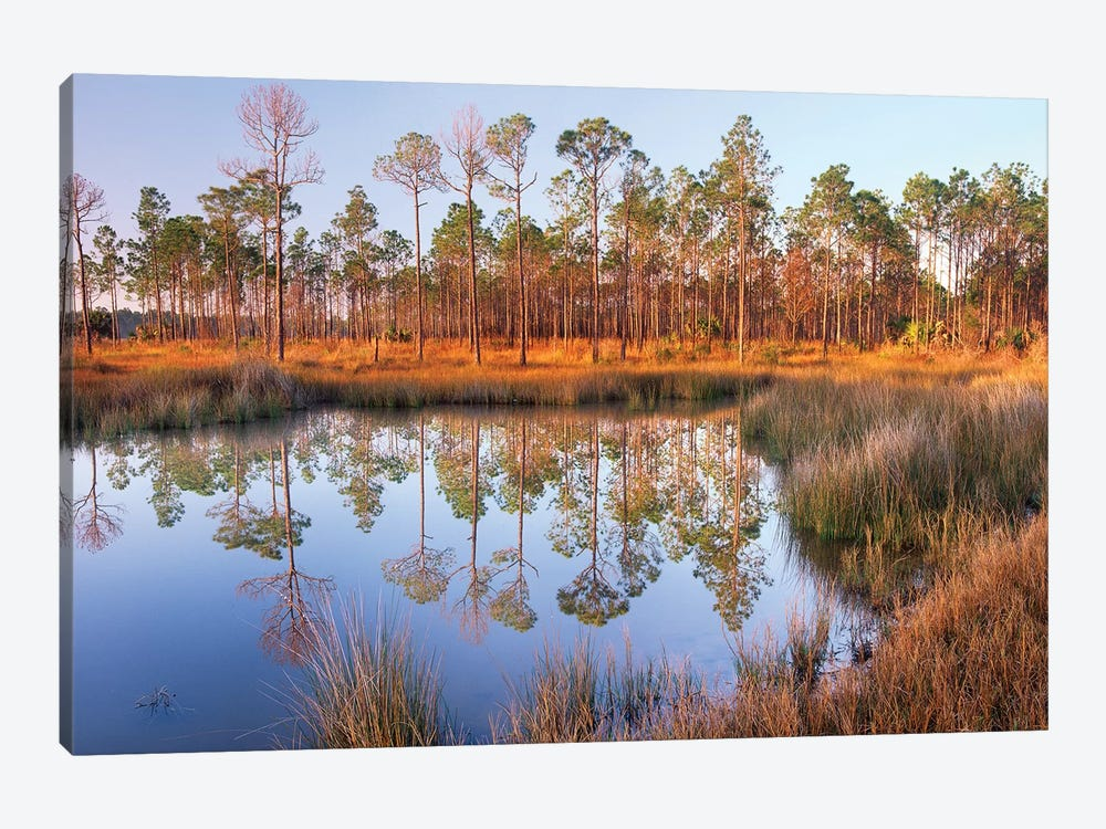 Pine Trees Reflected In Pond Near Piney Point, Hagen's Cove, Florida by Tim Fitzharris 1-piece Canvas Print