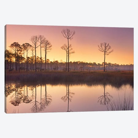 Pineland At Piney Point Near Hagen's Cove, Florida Canvas Print #TFI796} by Tim Fitzharris Canvas Print