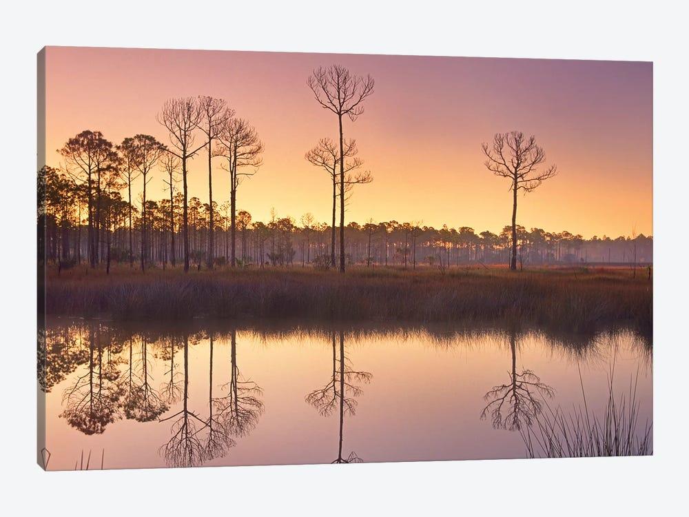 Pineland At Piney Point Near Hagen's Cove, Florida by Tim Fitzharris 1-piece Canvas Artwork