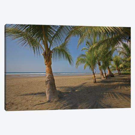 Playa Esterillos Este, Puntarenas, Costa Rica Canvas Print #TFI799} by Tim Fitzharris Canvas Wall Art