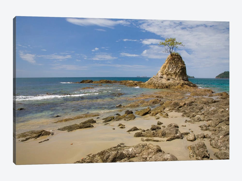 Point With Tree On Penca Beach, Costa Rica by Tim Fitzharris 1-piece Art Print