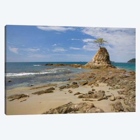 Point With Tree On Penca Beach, Costa Rica Canvas Print #TFI800} by Tim Fitzharris Canvas Artwork