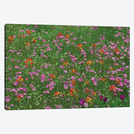 Pointed Phlox And Indian Paintbrushes In Bloom, Hill Country, Texas Canvas Print #TFI801} by Tim Fitzharris Canvas Wall Art