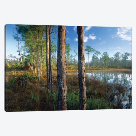 Pond Near The Loxahatchee River, Jonathan Dickinson State Park, Florida Canvas Print #TFI806} by Tim Fitzharris Canvas Art Print