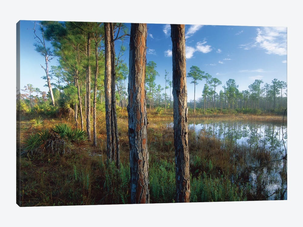 Pond Near The Loxahatchee River, Jonathan Dickinson State Park, Florida by Tim Fitzharris 1-piece Canvas Art Print