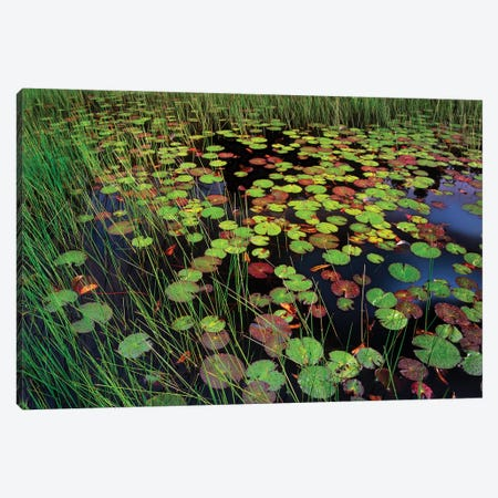 Pond With Lily Pads And Grasses, Cape Cod, Massachusetts Canvas Print #TFI809} by Tim Fitzharris Canvas Art