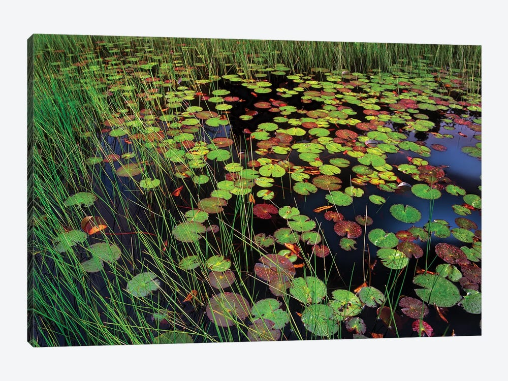 Pond With Lily Pads And Grasses, Cape Cod, Massachusetts by Tim Fitzharris 1-piece Canvas Wall Art