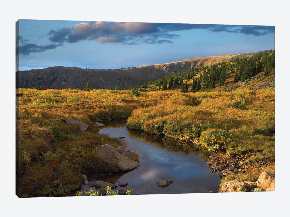 Ponderosa Pine Trees In Prairie Landscape, Black Hills, South Dakota by Tim Fitzharris 1-piece Canvas Art