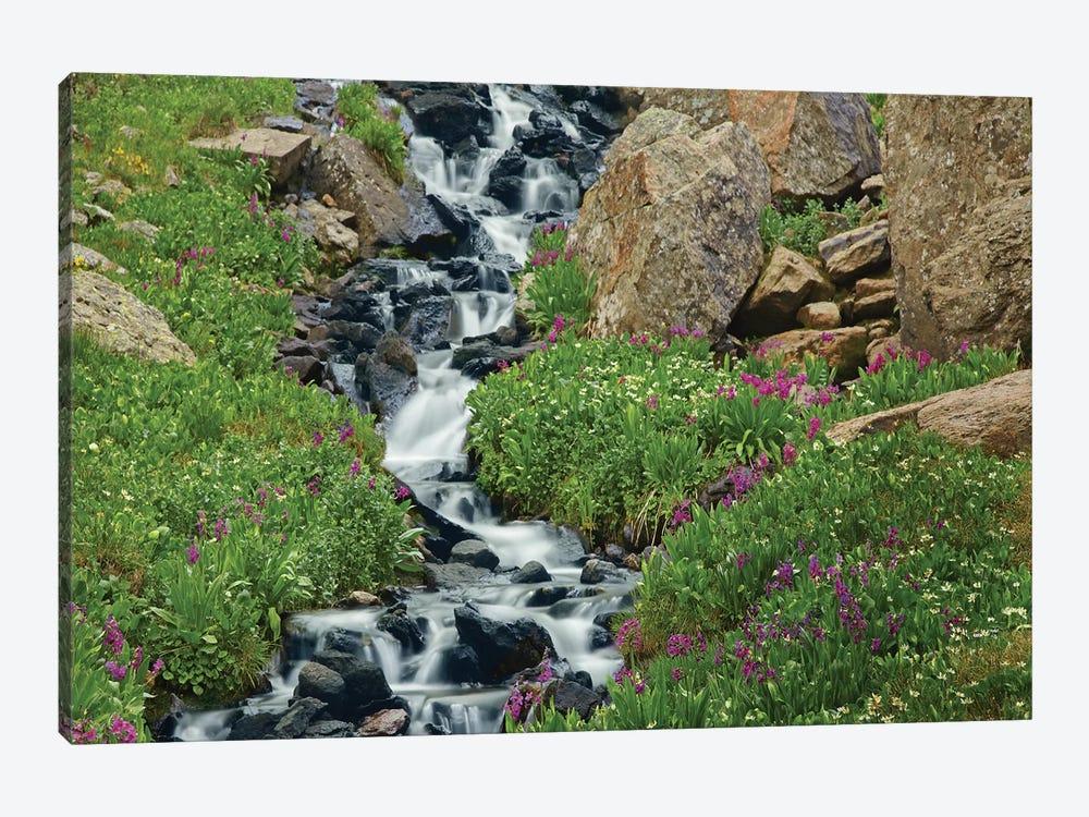 Porphyry Creek Near Silverton, Colorado I by Tim Fitzharris 1-piece Canvas Art