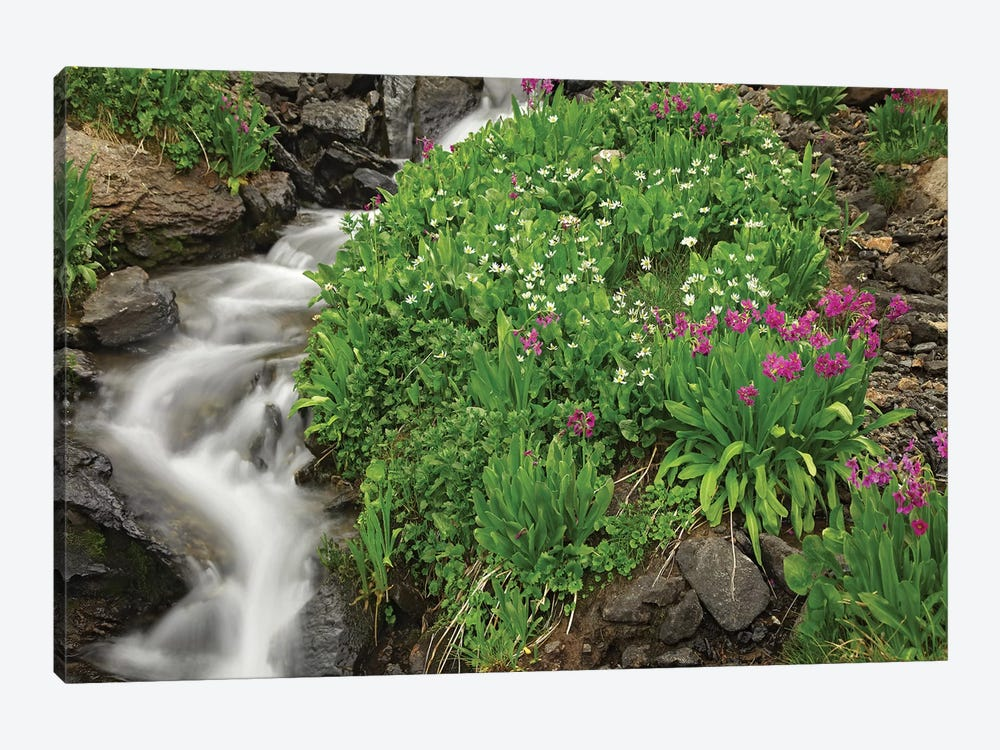 Porphyry Creek Near Silverton, Colorado II by Tim Fitzharris 1-piece Art Print