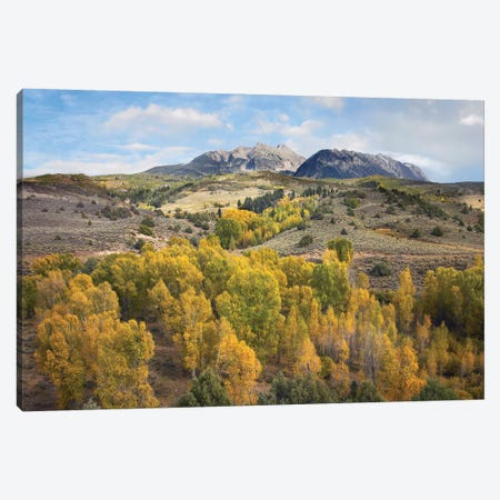 Quaking Aspen Forest And Chair Mountain In Autumn, Raggeds Wilderness, Colorado Canvas Print #TFI823} by Tim Fitzharris Canvas Art