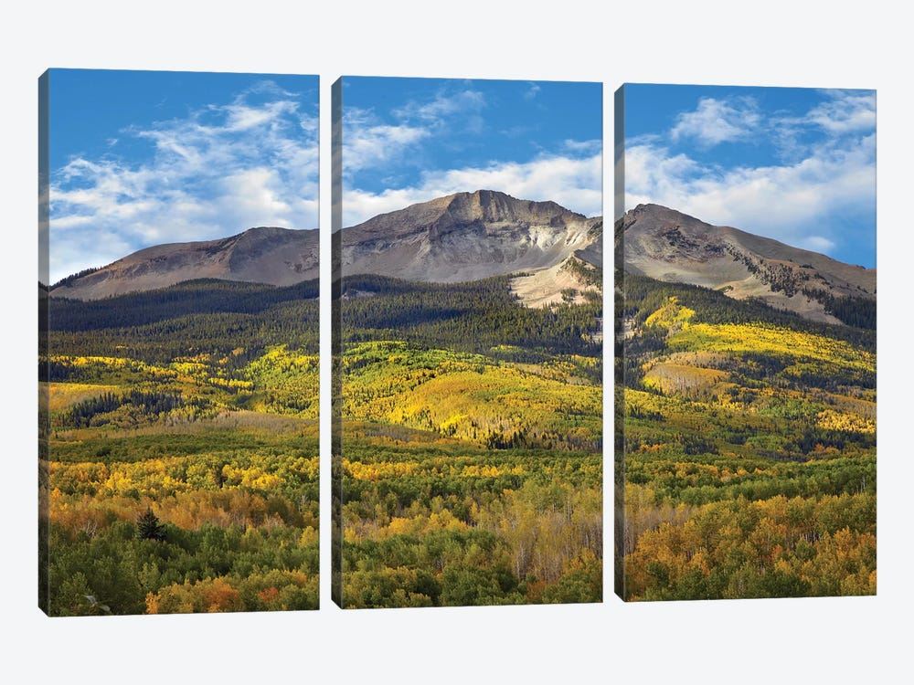 Quaking Aspen Forest And East Beckwith Mountain, West Elk Wilderness, Colorado by Tim Fitzharris 3-piece Canvas Print