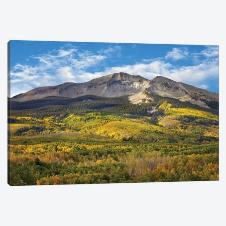 Quaking Aspen Forest And East Beckwith Mountain, West Elk Wilderness, Colorado Canvas Print #TFI824} by Tim Fitzharris Canvas Print