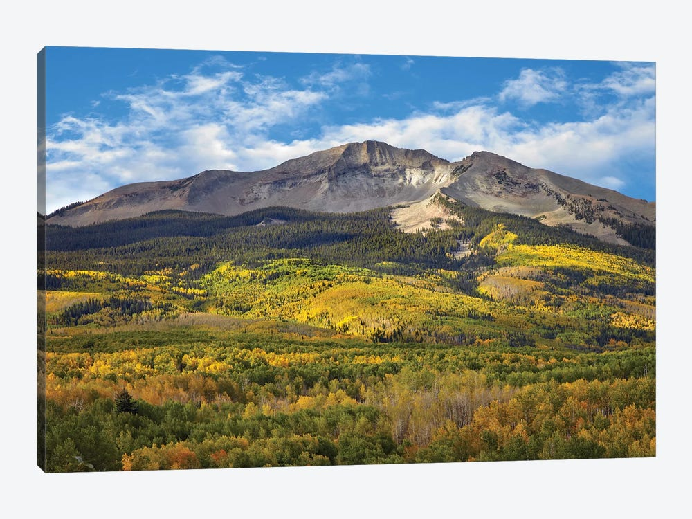 Quaking Aspen Forest And East Beckwith Mountain, West Elk Wilderness, Colorado by Tim Fitzharris 1-piece Art Print